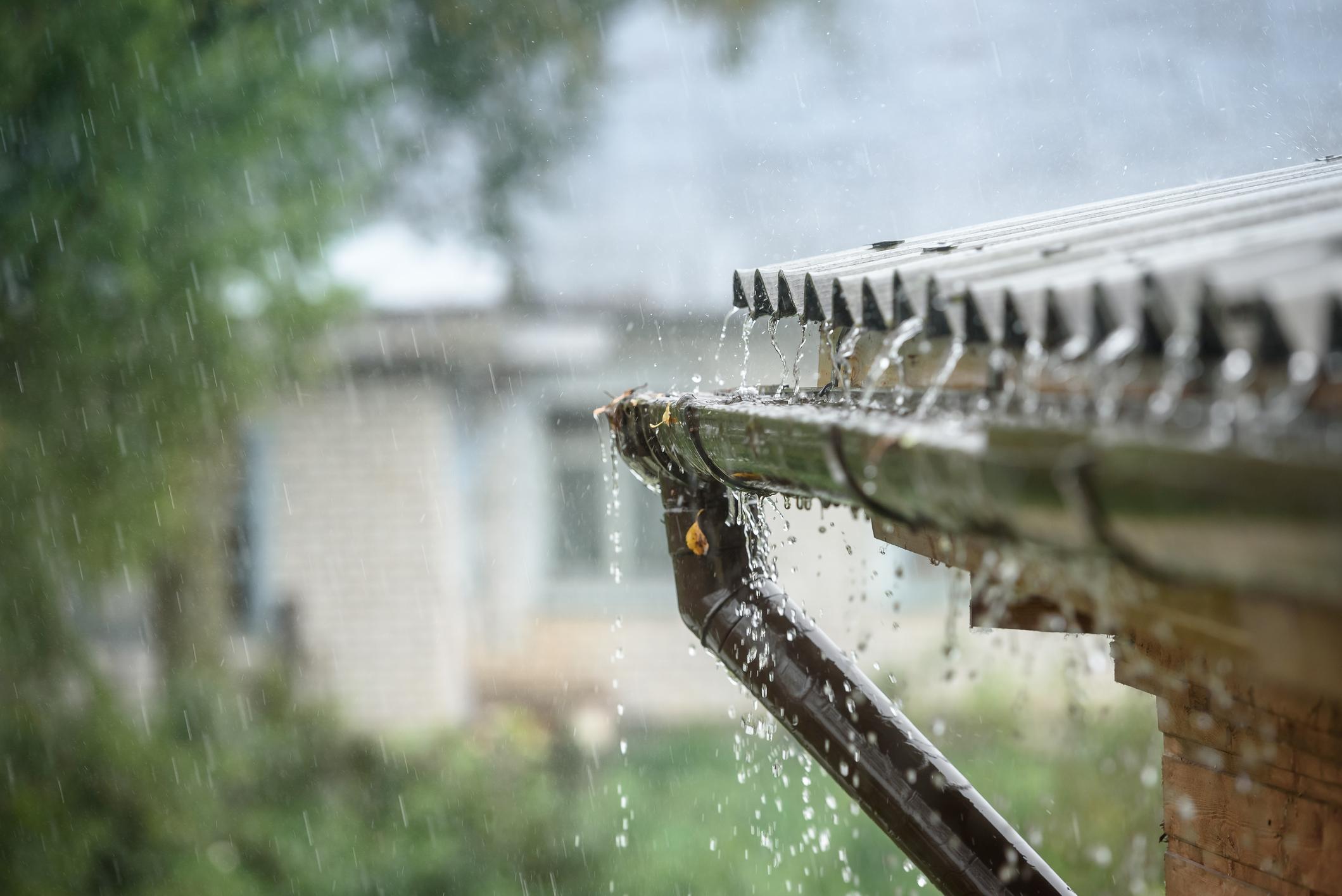 Com o começo da estação chuvosa em boa parte do país, os locais propícios para a criação do mosquito Aedes aegypti se multiplicam.
